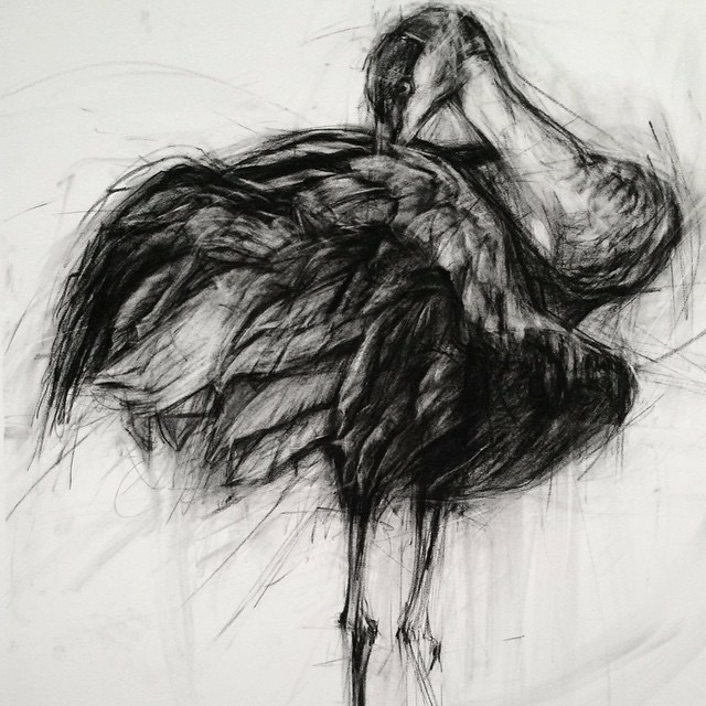 contemporary drawings - April Coppini D