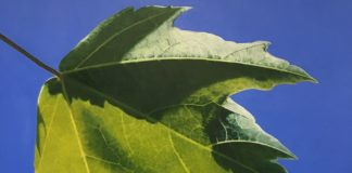 Painting of a leaf